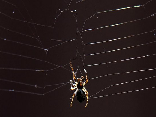 Spider silk startup spins into retail by buying an apparel company
